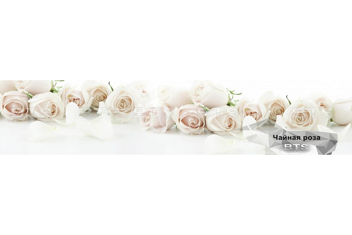 Стеновая панель, BTS №8 Чайная роза 2.8 м, шт